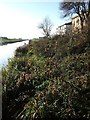 TL4786 : Old Bedford River at Purl's Bridge by Derek Harper