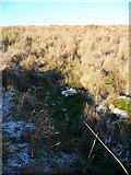 NS5632 : Dentibert Well by Gordon Brown