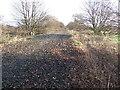 SJ4368 : Old Railway Embankment by BrianPritchard