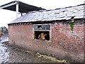 SJ4369 : Cowshed, Hoole Bank, Cheshire by BrianPritchard