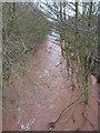 SO6937 : River Leadon upstream by Pauline E