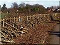 SK5910 : Rural craft :- Hedge laying at Wanlip : Week 3