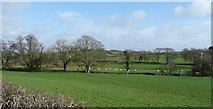 SS2200 : Pastoral scene near Burracott by Jonathan Billinger