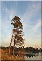 NS3855 : Sunset Trees : Week 7
