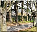 SX8861 : Stand of trees, Oldway mansion, Paignton : Week 7