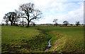 SJ5353 : Brook near Bulkelehay by Espresso Addict