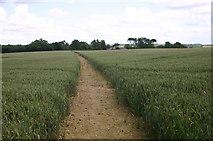 SP6633 : Clear path through the crops by Shaun Ferguson