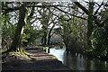 SX4773 : Tavistock: Tavistock Canal by Martin Bodman