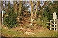 SP8505 : National Trust Low Scrubs by Shaun Ferguson