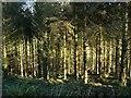 SX2685 : Woodland near Badharlick by Derek Harper