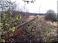 TL0039 : Adjacent to the Bedford to Bletchley railway line by Andrew Tatlow