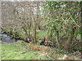 SH4657 : Sheep on the bank of Afon Carrog by Eric Jones