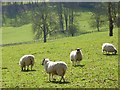 SU7692 : Pasture, Ibstone by Andrew Smith