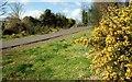 J3873 : The Comber Greenway (1) by Albert Bridge