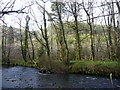 SX1664 : River Fowey and Largin Woods by Jonathan Billinger