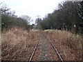NS8254 : Overgrown Railway Line - Bogside by M22RDY