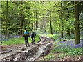 SU7391 : Bridleway in Longhill Hanging Wood by Andrew Smith