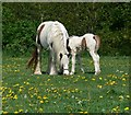 SK5601 : Mother and baby on Aylestone Playing Fields by Mat Fascione