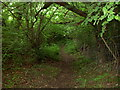 Dist:0.8km<br/>The footpath leads from Cymau lane up a steep hillside into a woodland before travelling parallel to the road.