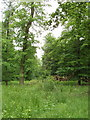 SU7594 : Commonhill Wood by David Hawgood