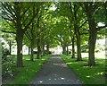 SE0733 : Foster Park - Denholme by Betty Longbottom