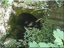 SE0023 : Culvert under ruined mill, Cragg Vale, Mytholmroyd by Humphrey Bolton