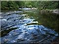 SX6872 : River Dart by Derek Harper