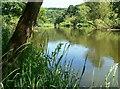 SO7778 : River Severn near Trimpley Reservoir : Week 23