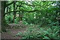 SJ5854 : Woodland by Brindley Hall Road by Espresso Addict