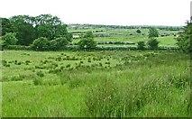 R2193 : Rushy Burren meadow by C Michael Hogan