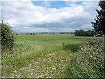 SE8923 : Near Spot Height 43m by David Wright