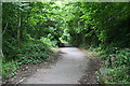 SX5257 : On the Plym Valley Cycleway by Tony Atkin