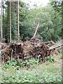 SU7588 : Trees felled by wind, Gussetts Wood by David Hawgood