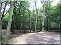 SU8496 : Downley Common by Nigel Cox