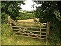 SX2159 : Gate near Herodsfoot by Derek Harper
