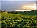 SU4181 : Farmland, Brightwalton : Week 28