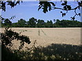 TL3450 : Wheat field seen through a gap in the hedge by Keith Edkins