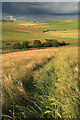 NT5040 : Farmland at Langshaw : Week 31