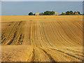SU1549 : Farmland, Haxton : Week 30