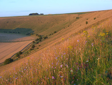 SU1857 : Pewsey Hill by Andrew Smith