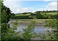 SX4560 : Saltmarsh, Tamerton Lake. Plymouth by Mick Lobb
