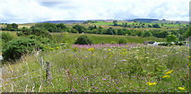 SN7908 : Flower-rich countryside by Jonathan Billinger