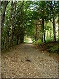 T2580 : Ballymoyle Forestry Plantation by David Quinn