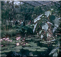 TQ1877 : Water lily house, Kew Gardens, 1965 by G H Clarke