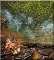 NS3983 : A slime mould - Ceratiomyxa fruticulosa (plasmodium) by Lairich Rig