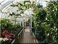 NS6363 : Tollcross Park - inside the Winter Gardens by Lairich Rig
