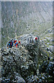 NN1672 : Ledge Route on Ben Nevis by Walter Baxter
