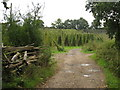 TQ8635 : Hop Field on Reader's Bridge Road, near Biddenden by Oast House Archive