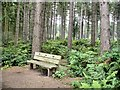 SJ5472 : Norley - Delamere Forest - bench beside track at the forest edge by Mike Harris