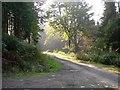 SJ2504 : Forest track, Leighton Park woods : Week 38